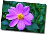 Flower 004 (2)